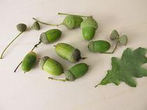 Grüne Eicheln mit Eichelhütchen im Spätsommer von Heike Rau