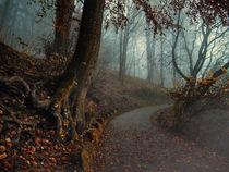 Fußweg zur Burgruine Hohentwiel bei Singen im Nebel von Christine Horn