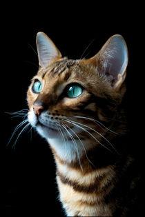 Portrait einer Bengalkatze von Christine Bässler