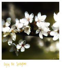 'Enjoy the Springtime' von Sandra  Vollmann