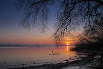 Sonnenaufgang auf der Halbinsel Höri bei Iznang - Bodensee von Christine Horn