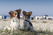 Ein Tag am Strand / 4 by Heidi Bollich