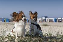 Ein Tag am Strand / 5 by Heidi Bollich