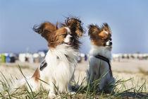 Ein Tag am Strand / 7 von Heidi Bollich