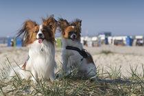 Ein Tag am Strand / 6 von Heidi Bollich