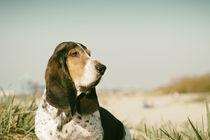 Ein Tag am Strand / 9 von Heidi Bollich