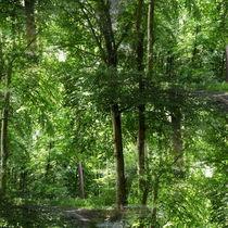 Waldbaden by Irmtraut Prien