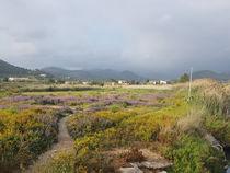Port d'Andratx  - wunderschöne Natur - Berge - Fluss - Meer - Mallorca von wirmallorca
