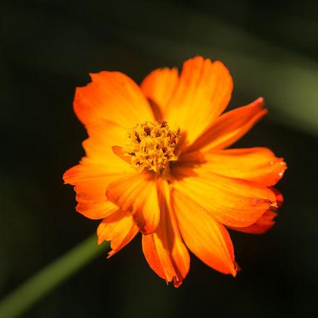 Blute-orange-801318