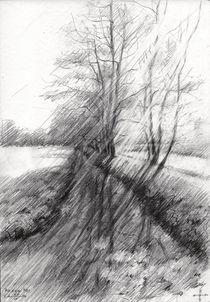 The Hague Forest - 23-04-14 von Corne Akkers
