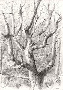 Meyendel - 09-04-14 by Corne Akkers