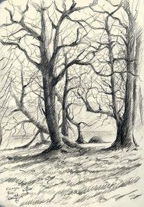 The Hague Forest - 09-03-14 von Corne Akkers