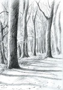 The Hague Forest - 13-03-14 by Corne Akkers
