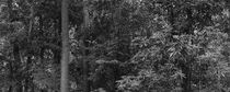 Panoramic image of native vegetation in black and white by erich-sacco