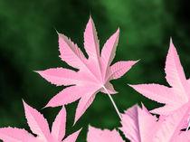 Magenta leaf by erich-sacco