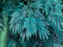 turquoise small leaves by erich-sacco
