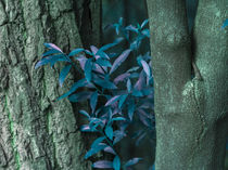 detail turquoise leaves between trunks by erich-sacco
