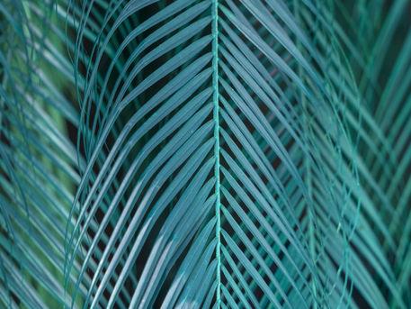 Mg-3185-folha-de-coqueiro-turquesa-vert