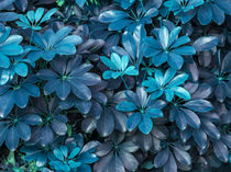 leaves of turquoise by erich-sacco