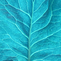 detail of a leaf in turquoise by erich-sacco