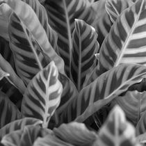 Vegetation of leaves in black and white by erich-sacco