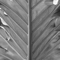 Vegetation of leaves in black and white von erich-sacco