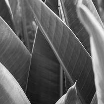 leaf vegetation in black and white von erich-sacco