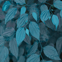 vegetation of leaves in turquoise by erich-sacco