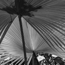 Coconut foliage by erich-sacco