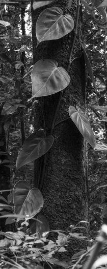 Vertical creeper by erich-sacco