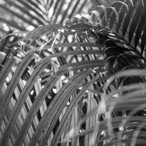 Coconut leaves by erich-sacco