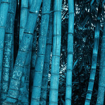 turquoise bamboo by erich-sacco