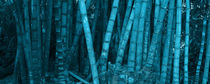 Panoramic of turquoise bamboo vegetation by erich-sacco