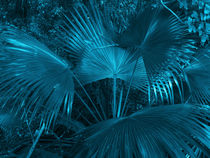 turquoise coconut foliage by erich-sacco