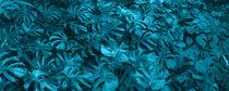 turquoise adam rib panorama by erich-sacco