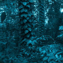 vegetation of the Brazilian forest by erich-sacco
