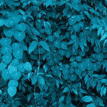 Leaves of Brazilian vegetation tuquesas by erich-sacco