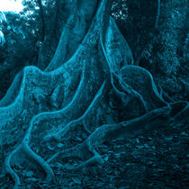 Large tree with tuquesas roots von erich-sacco