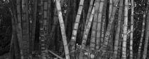 panoramic vegetation in bambo by erich-sacco