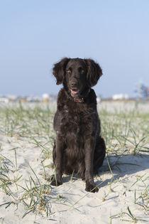 Ein Tag am Strand / 10 von Heidi Bollich