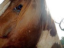 Morning Horse by Edgar Lück
