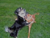 Dancing Dogs von Edgar Lück
