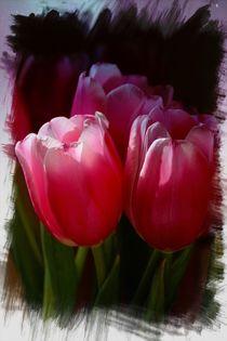 Tulpe von Ingrid Bienias