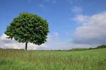 Lieblingsbaum von Ingrid Bienias