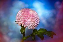 Blütenzauber von Claudia Evans