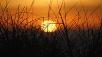 Dünengras vor aufgehender Sonne von Bodo Balzer