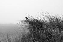 Lerche auf Dünengras von Bodo Balzer