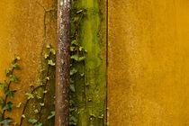 Rusty Drain Pipe von Jim Corwin