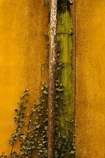 Rusting Drain Pipe  von Jim Corwin