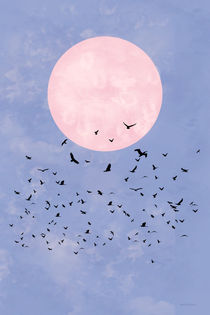 FLY TO THE MOONLIGHT by Monika Minder